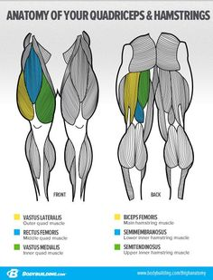 Bodybuilding.com - Ask The Siege: 'What's The Best Way To Build Big Legs?' -- Anatomy of the Legs and how to change their shape #MissFitGear