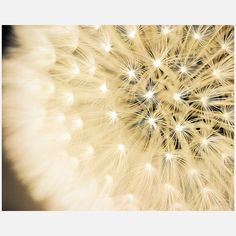 Truly breathtaking. :: Summer Fireworks by Keri Bevan
