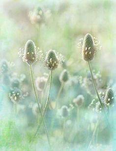 16 textured flower images and an interview with Teresa Pople. Teresa uses textures in a delicate, painterly way with delicious colors. Flowers Nature, Wild Flowers, Beautiful Flowers, Soft Colors, Green Colors, Flora Und Fauna, Flower Images, Belle Photo, Shades Of Green