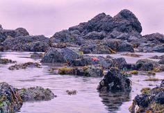 tide pools cannon beach