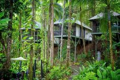 Daintree Eco Lodge & Spa  #Queensland #Australia