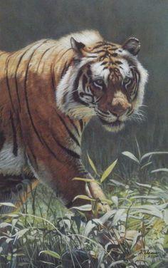 Terry Isaac Catwalk -Tiger