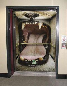 Un leone in ascensore