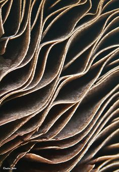 Art in Nature - mushroom closeup with rippling layers & textures; organic inspirations for design