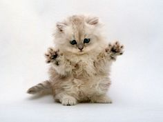 """In the spirit of his namesake, Fosse was meticulous about perfecting his """"jazz hands"""" move. #catherineclinch"""
