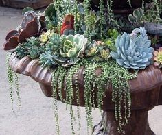 succulents: beautiful and low maintenance.