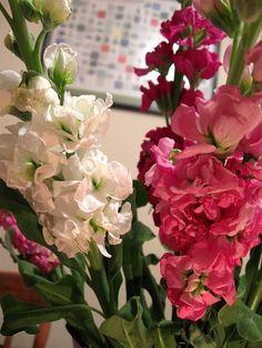 stocks  #stocks #flowers