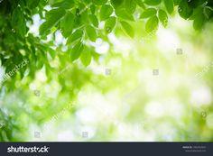 Closeup Nature View Green Leaf On ภาพสต็อก (แก้ไขตอนนี้) 1402453565 Nature Green, Green Leaf Background, Nature View, Green Leaves, Close Up, Stock Photos