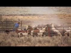 Congress: Stop Sterilization & Slaughter of 50,000 Wild Horses  American Wild Horse Preservation Campaign    BLM's 2017 Budget Opens Door for Wild Horse Slaughter & Sterilization
