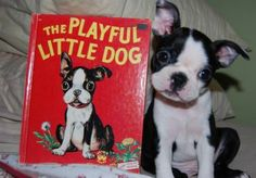 We need this book in our family! And the dog... @Chance Lusk :o)