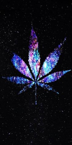 Smoke the weed every day. Dont smoke the seed no way!