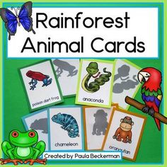 Rainforest Animal Cards for Read the Room, Matching Games, and More! Rainforest Theme, Rainforest Animals, Giant Anteater, 120 Chart, Concentration Games, Red Eyed Tree Frog, Poison Dart Frogs, Morpho Butterfly