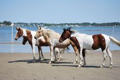 Maverick and mares