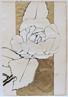 B-sides: Robert Kushner(American, 1949) White Camellia ...