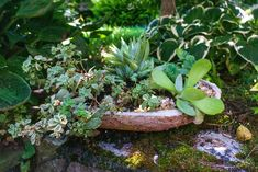 This video shows how to make a sustainable hypertufa container. These troughs are typically molded using a mixture of portland cement, perlite, and peat moss, but in this tutorial, I'll be working with coconut coir as a more sustainable replacement for the peat moss. Fine Gardening, Container Gardening, Gardening Tips, Lawn And Garden, Garden Art, Garden Design, Dry Coconut, Alpine Plants, Portland Cement