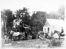 Women vote at their first election, Tahakopa A brief history of voting in New Zealand - Election - The Wireless Nz History, History Online, Women In History, Old Photos, Vintage Photos, Strong Women, New Zealand, Scenery, The Originals