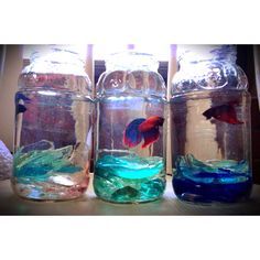 Recycled spaghetti jars, found glass shards and three fish!