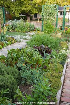 Ornamental Edible Garden Mixed Bed Of Herbs, Vegetables, And Flowers  Between Paths In Rosalind