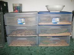 Raising Mealworms for Chicken Treats