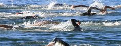 Best in the West Triathlon Festival Athletic Events, Triathlon, Bring It On, Racing, Animals, Running, Triathalon, Animales, Animaux