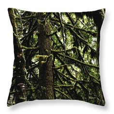 """Rain Forest Tree  # 2780 Throw Pillow by Tom Janca.  Our throw pillows are made from 100% spun polyester poplin fabric and add a stylish statement to any room.  Pillows are available in sizes from 14"""" x 14"""" up to 26"""" x 26"""".  Each pillow is printed on both sides (same image) and includes a concealed zipper and removable insert (if selected) for easy cleaning."""