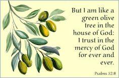 Sip A Bit Of Serenity: Psalm 52:8