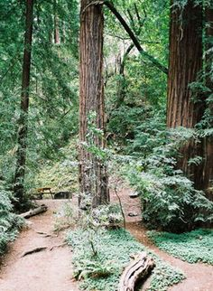 ...camping in Big Sur...bluff camping in the redwood trees and Big Sur River...meadows and beaches...great hiking opportunities, fishing and did I sing...there goes John Jacob Jingle Heimer Smith..lala la lala la la!
