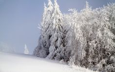 Preview wallpaper forest, winter, snow