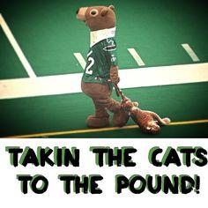 Saskatchewan Roughrider's Gainer the Gopher taking the Hamilton Tigercats mascot to the pound! /=S=/