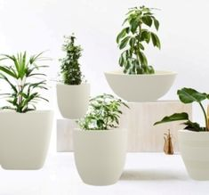 Great Plant Pots Plant pots from left to right. Styling – Nat Turnbull, Photo – Elise Wilken for The Design Files.Plant pots from left to right. Styling – Nat Turnbull, Photo – Elise Wilken for The Design Files. Concrete Pots, Concrete Planters, Planter Pots, Hanging Planters, White Planters, Potted Plants, Indoor Plants, Small Plants, Plant Texture
