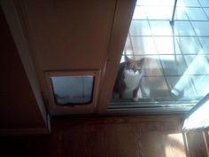 Este tipo que aún no puede entender cómo atravesar una puerta para gatos. | Los 40 gatos más torpes del 2013