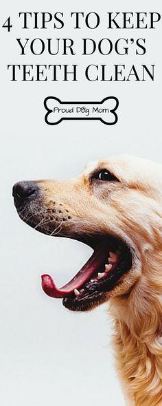 4 Tips To Keep Your Dog's Teeth Clean | Dog Health Tips |