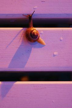 Snail on a purple bench