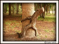 Funny! -- Knotty Trees by minds-eye, via Flickr