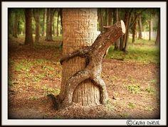 Funny! -- Knotty Trees by minds-eye, via Flickr