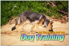 Should Dogs Eat Tomatoes Dog Obedience Classes, Flea And Tick, Dog Eating, Fleas, Dog Training, Kangaroo, Tomatoes, Dogs, Animals