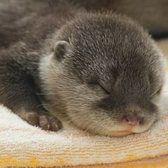 buy me a baby otter and ill love you forever.