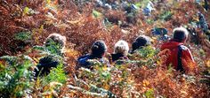 Connemara Walks - guided heritage walks with archaeologist Michael Gibbons - Visit Alcock & Brown Landing site, Marconi Station, megalithic sites & more. Secluded Beach, Connemara, Family Activities, Campsite, Ecology, Walks, Habitats, Trek, Ireland