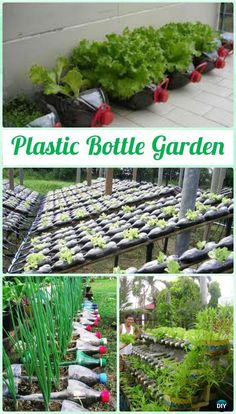 DIY Plastic Bottle Garden Projects & Ideas: Collection of plastic bottle herbs, vegetables and flower gardening, water irrigation and Homemade Greenhouse, Outdoor Greenhouse, Best Greenhouse, Greenhouse Ideas, Portable Greenhouse, Greenhouse Plants, Plastic Bottle Greenhouse, Diy Plastic Bottle, Greenhouse Interiors