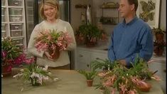 The Christmas cactus is a cheery plant that adds color and flowers to your home in winter. Here's expert tips on caring for a Christmas cactus. Planting Ginger Root, Pretty Flowers, Purple Flowers, Primrose Plant, Christmas Cactus Care, Martha Stewart Christmas, Wooden Mailbox, How To Grow Cactus, Cactus Terrarium