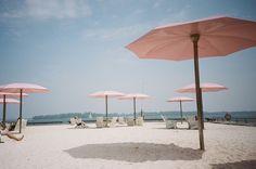 fieldguided: sugar beach