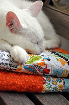 rusty and the quilt by kabs_concepts, via Flickr