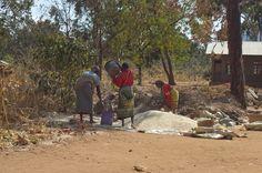 Gathering the Maize harvest in Ilambilole, Tanzania.  ©2009 Randy Haglund