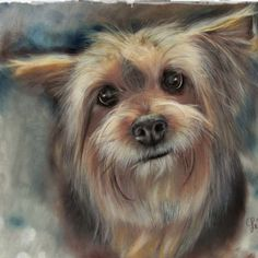 Ilpiù anziano dei miei cani,Mirto, ha raggiunto da poco la veneranda…