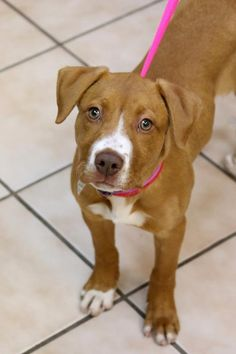 You can fill out an adoption application online on our official website.If you are interested in adopting, please fill out an application here.Age: 3 Months  Breed: American Staffordshire Terrier Mix  Gender: Female  Weight: 20 Pounds  Dog Friendly:...