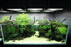 aquarium layouts - Google Search