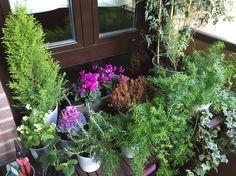 Platas - Plants - Terraza - Purple
