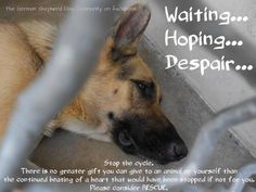 My friends please consider rescuing a dog when thinking about getting a new companion!