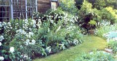 I want my garden to look like this. So much better than anything too neat and overplanned - Tasha garden
