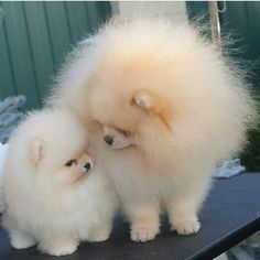 I WANT A PUFF BALL